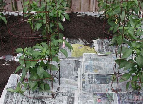 How To Make Paper Mulch - strong diy killer recipes that work