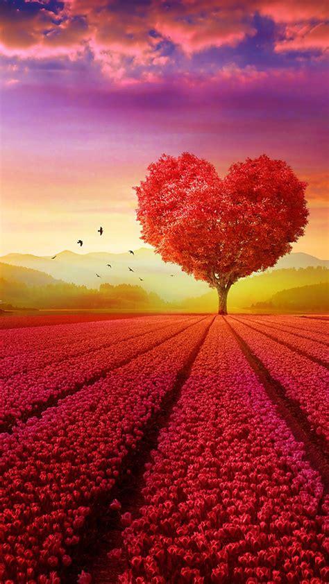 hd photo heart natural sundown tree wallpaper hd