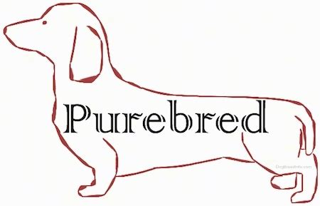 types of purebred dogs list of purebred breeds in alphabetical order