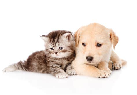 cute dog  cat wallpaper pixelstalknet