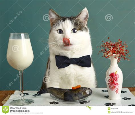 Cat Dreams Of Fish Birds Milk by Cat In Restaurant With Milk And Fish Stock Image