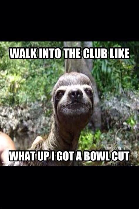 Funny Sloth Pictures Meme - 23 best images about funny sloth jokes on pinterest