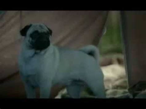 pug ad all hutch vodafone pug ads