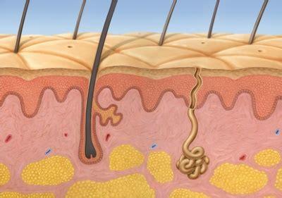melaninproduktion funktion aufgabe krankheiten