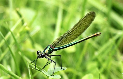 picture dragonfly arthropod insect wildlife