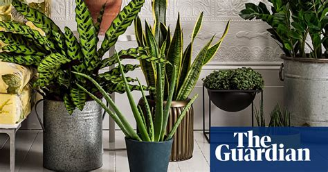 house plants life  style