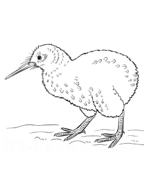 coloring page kiwi bird kiwi coloring pages download and print kiwi coloring pages