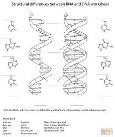 dna coloring worksheet rna and dna worksheet coloring page free printable