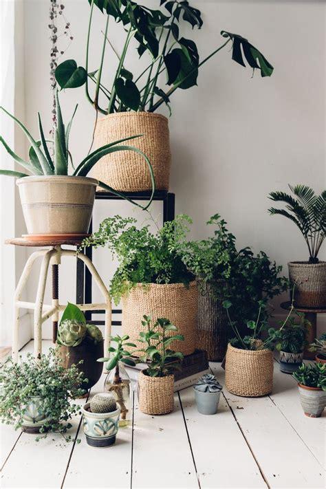 home interior plants 25 best ideas about storage baskets on