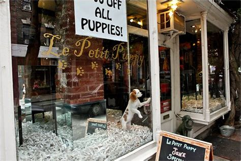 puppy stores puppy purchasing when a common city scourge the new york times