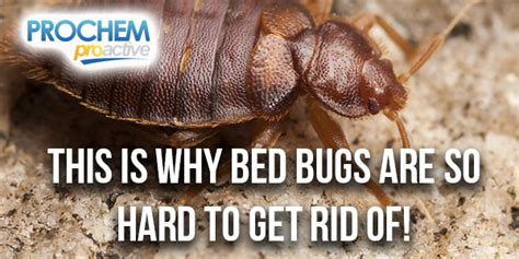 Chemicals That Kill Bed Bugs by Nevada Prochem Proactive