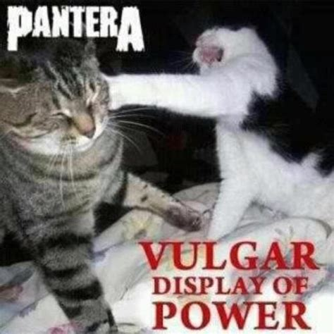 Vulgar Memes - funny cats vulgar display of power
