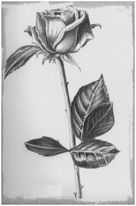 imagenes de flores dibujadas a lapiz dibujos de rosas a lapiz bbcpersian7 collections