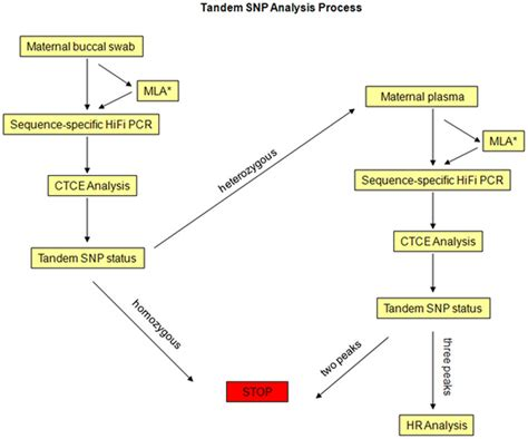 Gene Snp Detox Test by File Trisomy 21 Detection Using Tandem Single Nucleotide