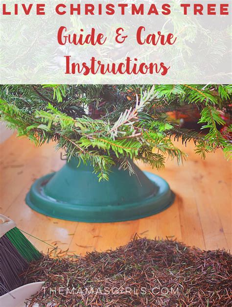 live christmas tree guide care instructions