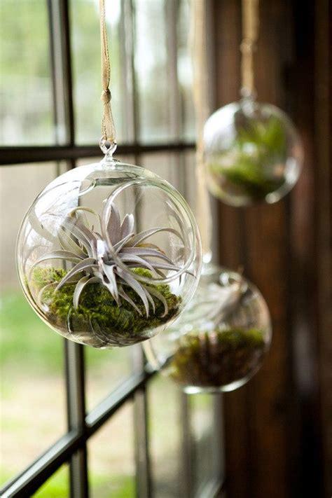 kitchen window terrarium 99 best images about tillandsia air plants on pinterest