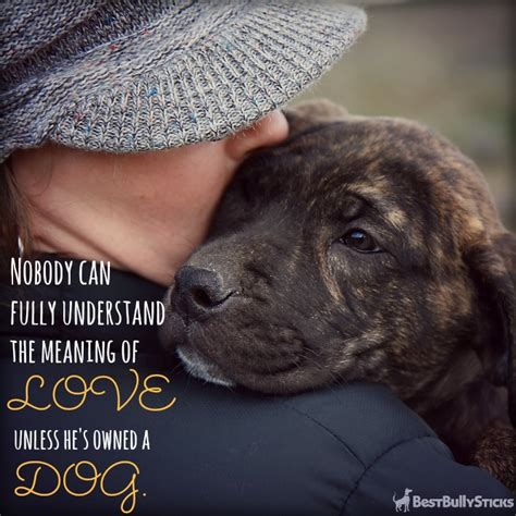 loving dogs happy quotes