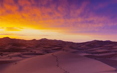 Sand dunes illuminated at sunrise, Erg Chebbi, Sahara
