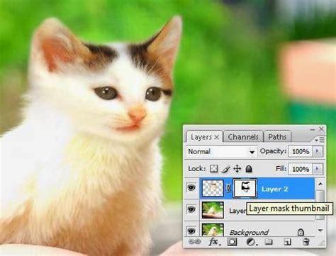 tutorial gambar ayam tutorial photoshop menggabungkan kucing dan ayam psd48