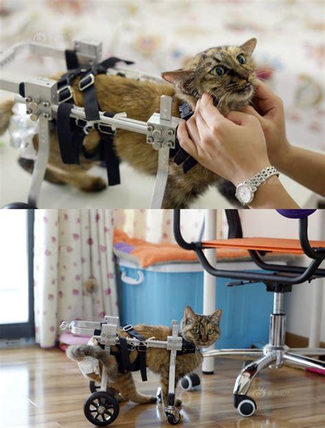 Kursi Roda Untuk Kucing sweet wanita ini buatkan kursi roda untuk kucingnya yang