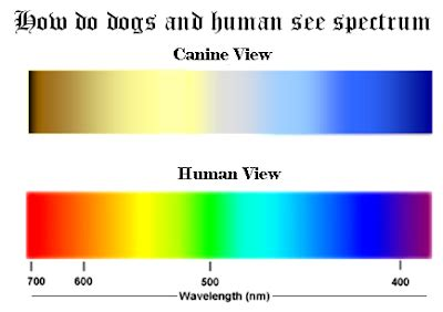 can dogs see colors welcome the breeds