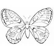 Disegni Animali Da Colorare Farfalla Disegno Farfalle