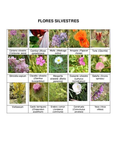 Imagenes Flores Silvestres Sus Nombres | flores silvestres e insectos