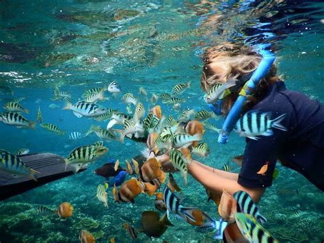 best fast boat from sanur to nusa penida best deal 3 spot snorkeling day trip to nusa lembongan