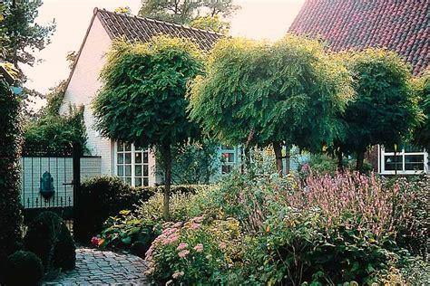 vorgarten mit gräsern kugelb 228 ume f 252 r den vorgarten gartentechnik de