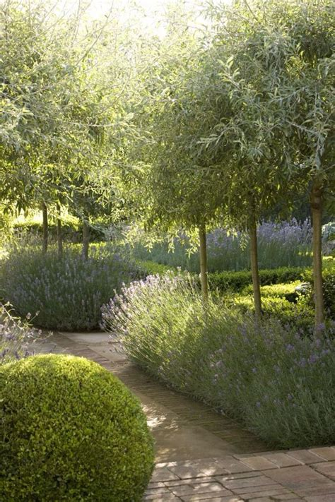 alley garden by fudge landscapes boxwoods 9330 best in the garden images on landscaping