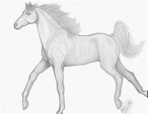 Pencil drawings of horses of objects tumble of flowers of eyes of