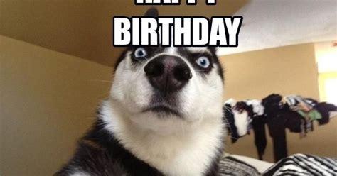 funny birthday meme dog google search birthday