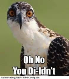 Meme Bird - 30 most funny bird meme pictures of all the time