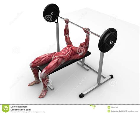 bench workout male workout bench press stock photography image 15434762