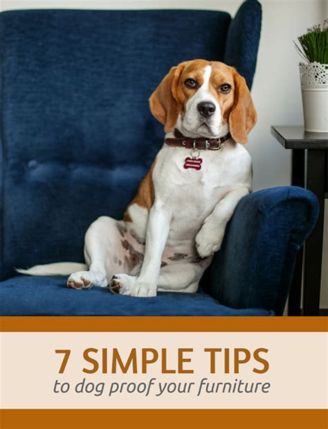 8 Simple Ways To Dog Proof Your Furniture Puppy Leaks