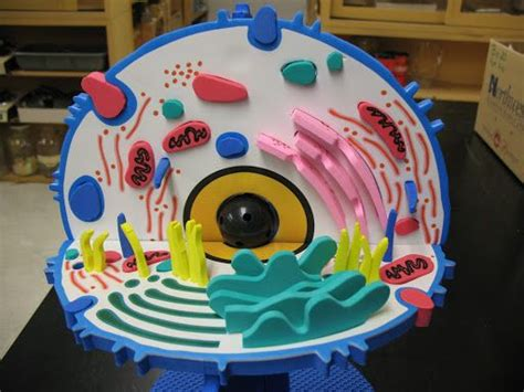 3d animal cell diagram 15 best images about 3d animal cell project ideas on