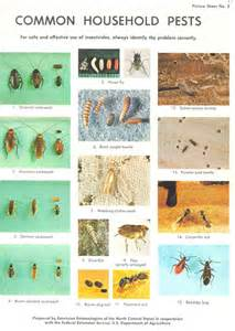 house pest common household pests pictures to pin on pinterest