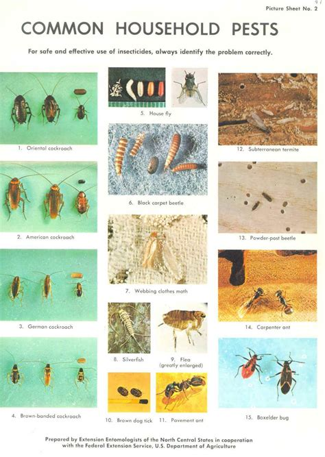 common house bugs pin common household pests and where they live on pinterest