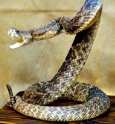Garter Snake Kill Prey Types Of Clocks Types Of Snakes