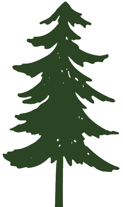 Pine Tree Outline by Pine Tree Graphic Clipart Applique Pine Tree Silhouette Pine Tree And Tree