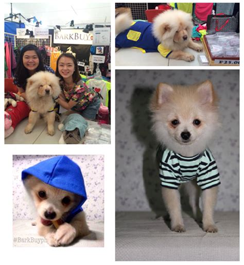 how much is pomeranian in philippines where to buy clothes in manila bark buy philippines