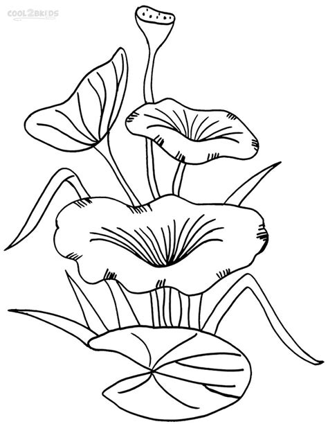 lily pad coloring template coloring pages