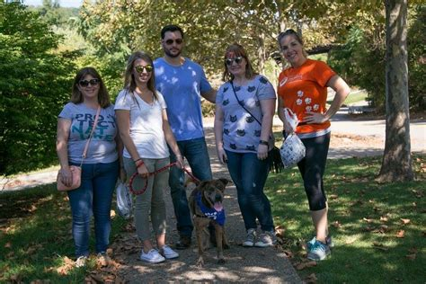 8 Ways To Help Out Your Local Animal Shelter by 5 Ways To Help Your Local Animal Shelter Pet Adoption