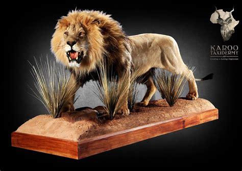 lion mounts