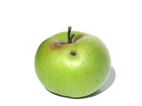 Sprei Apple free stock photos rgbstock free stock images no