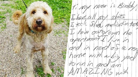 abandoned dogs heartbreaking note left with loved and cherished