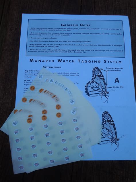 monarch watch migration tagging tagging butterfly faq how to tag a monarch butterfly in six easy