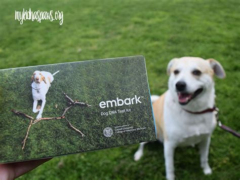 embark dna embark dna test learning more about your my kid has paws