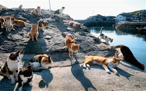 cat island japan 20 seriously weird places around the world rough guides