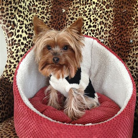 yorkies on instagram 10 small breeds that are great with children